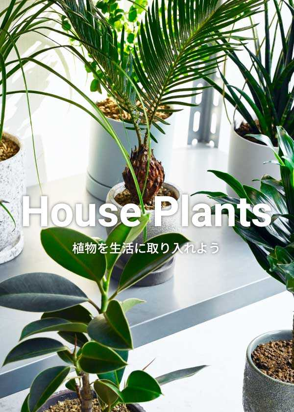 House Plants -植物を生活に取り入れよう-